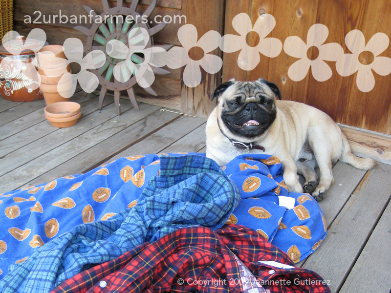 Use A Recycled Bedsheet To Make A Dog Leash