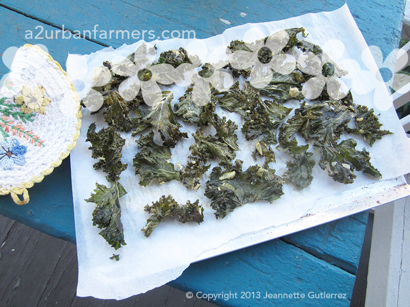 Kale chips, fresh from the oven!